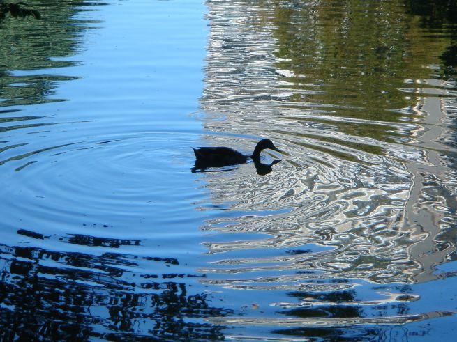 duckzilla