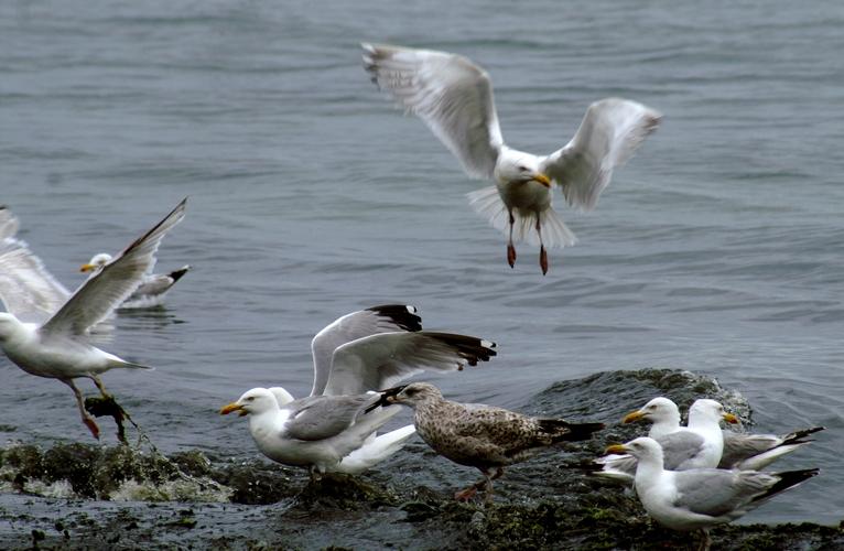 thom yorke, l'albatros