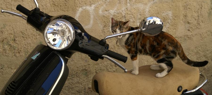 lazy rider