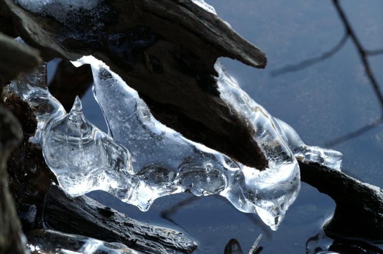 le gel crucifié