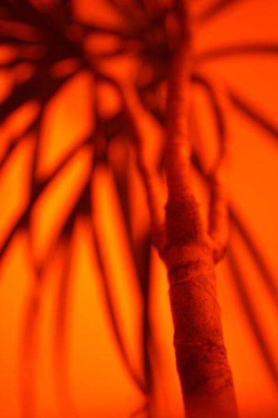 envies de tropiques
