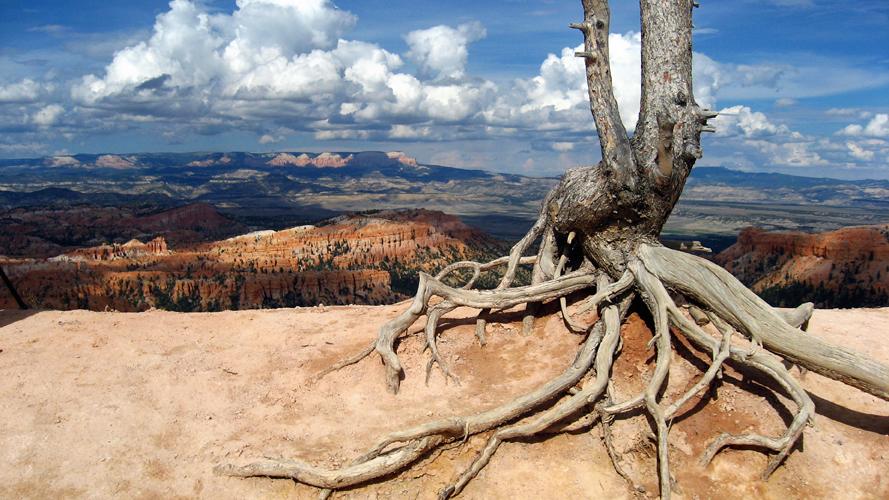 l'arbre qui rêvait de voler