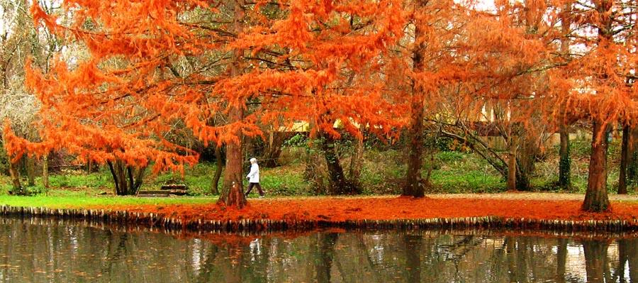 la promeneuse de l'automne rouge