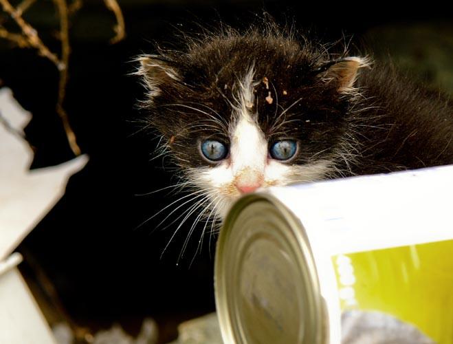 chaton de gouttière