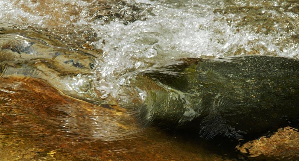 au creu de la vague