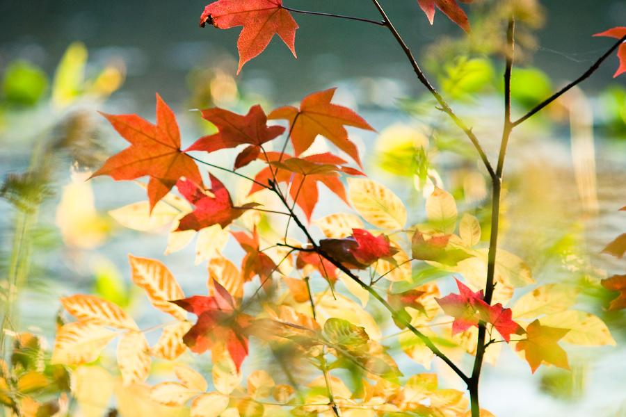 (promenons-nous dans les bois) pendant que l'hiver n'y est pas #2