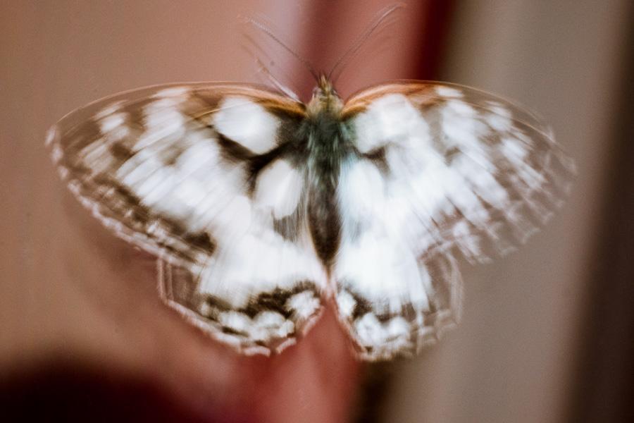un papillon nommé Rorschach