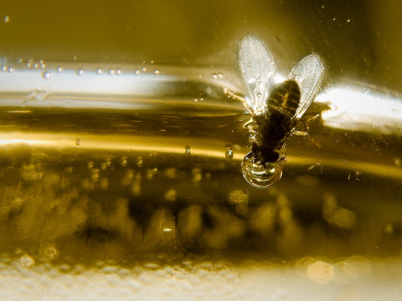 un dernier verre pour la mouche