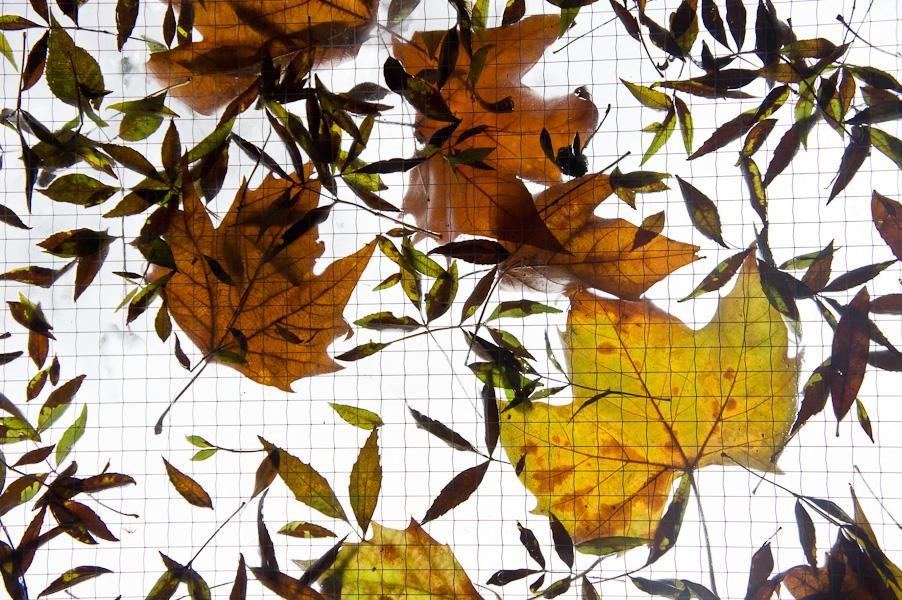 heure d'automne #4