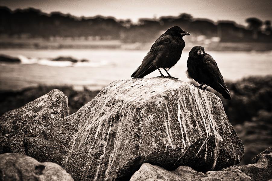 six feet under #1 (a crow left of the murder)