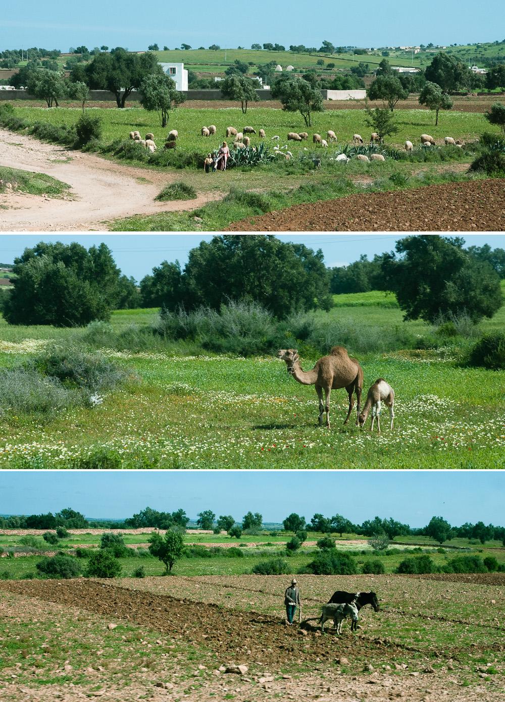 le Maroc à la saison verte