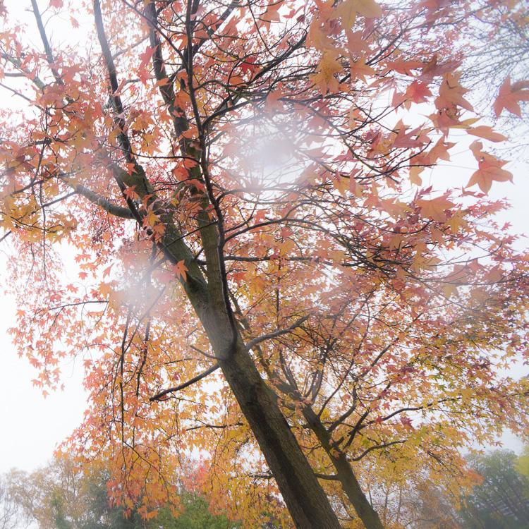 le fantôme de l'automne