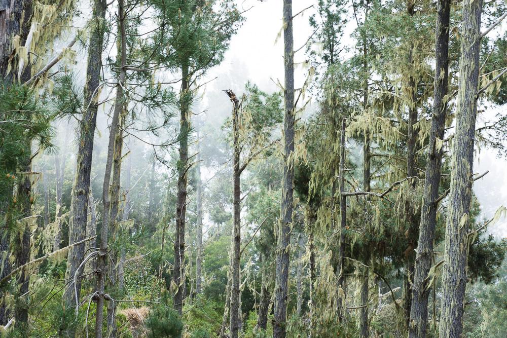 la vieille forêt