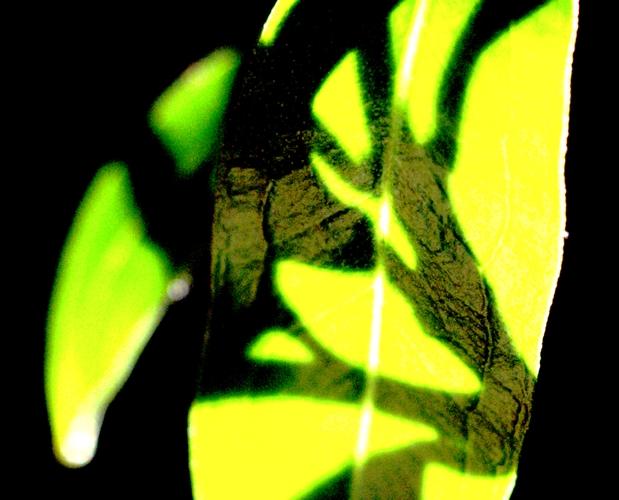 ombre et lumière sur le vert