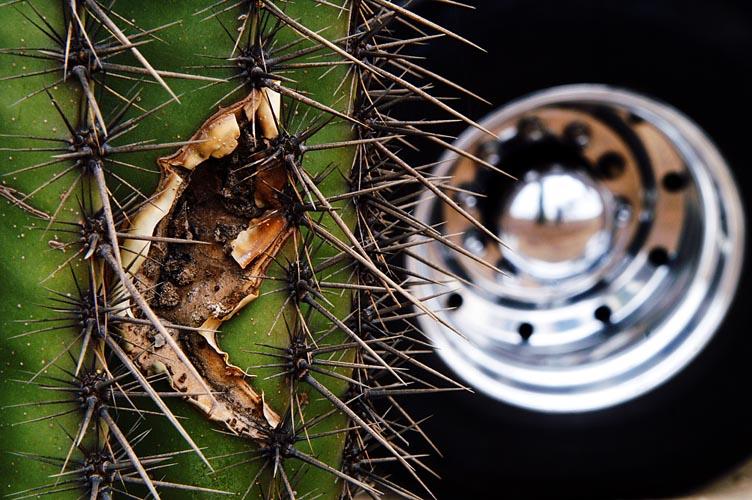 du cactus dans les pneus