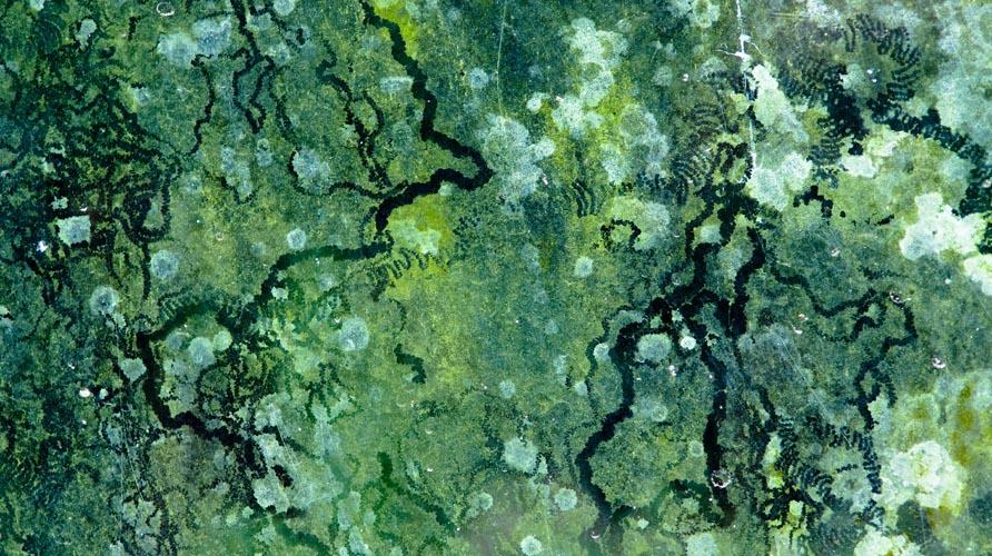 la vie sur mars la verte