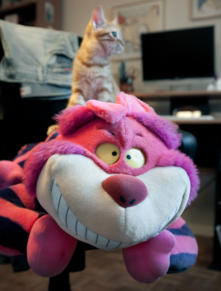 chat roux, chat fou
