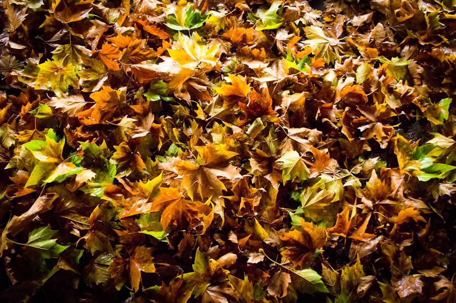heure d'automne #3
