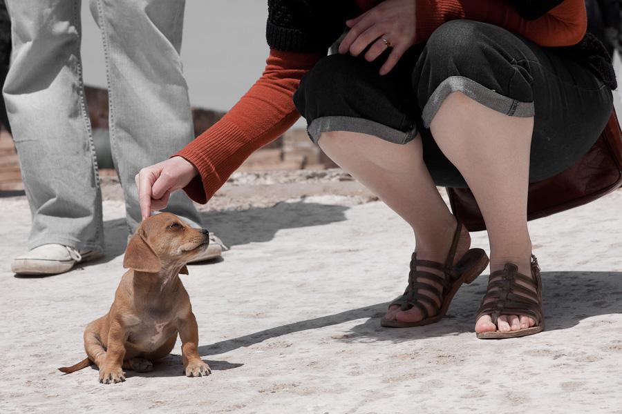 le meilleur ami du chien
