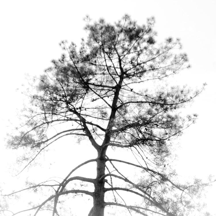 nostalgie des pins des landes