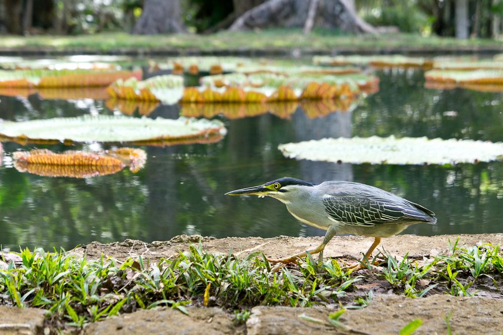 à la pêche #2 (Kayali des jardins Pamplemousse)