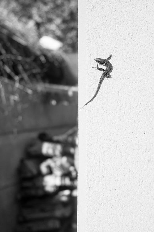 ma moitié reptile