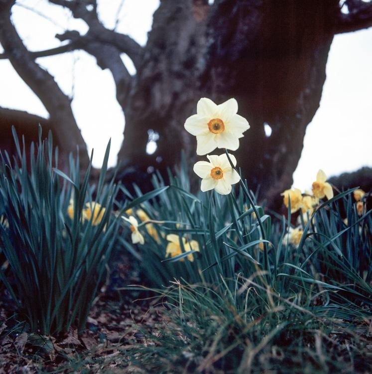les yeux jaunes du printemps et l'ombre de l'hiver