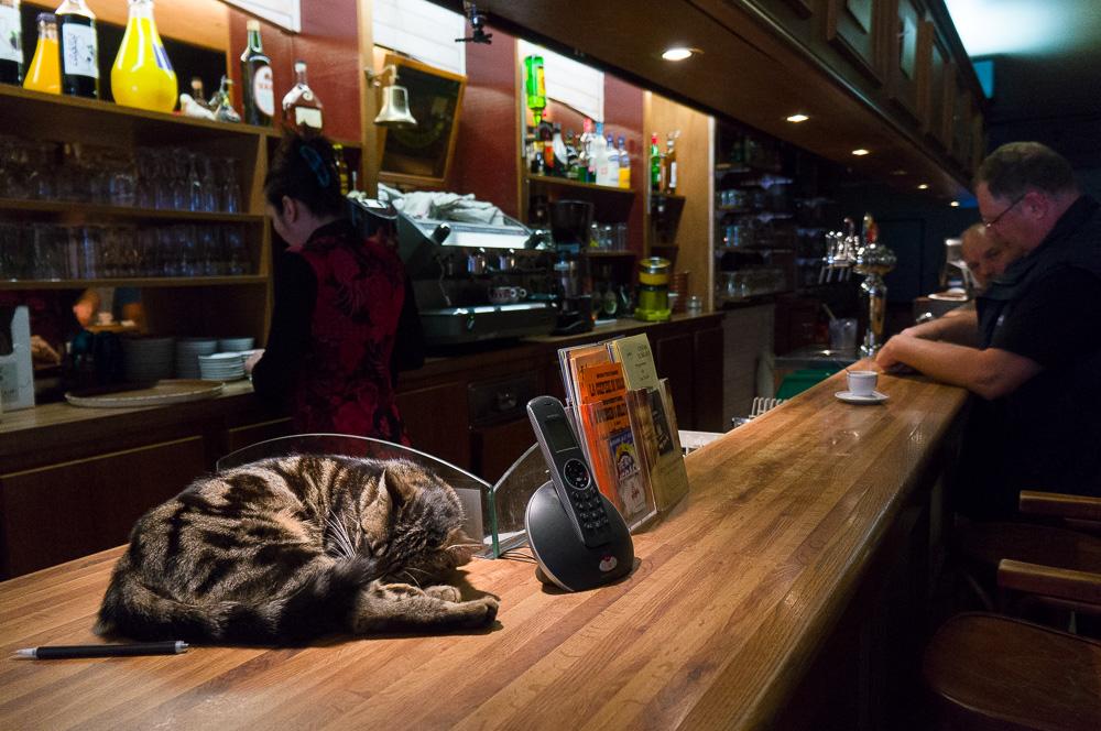 chat de comptoir